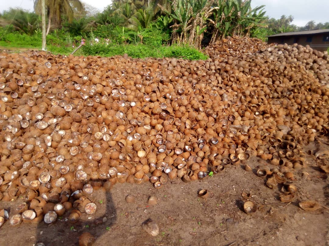 coconutshell